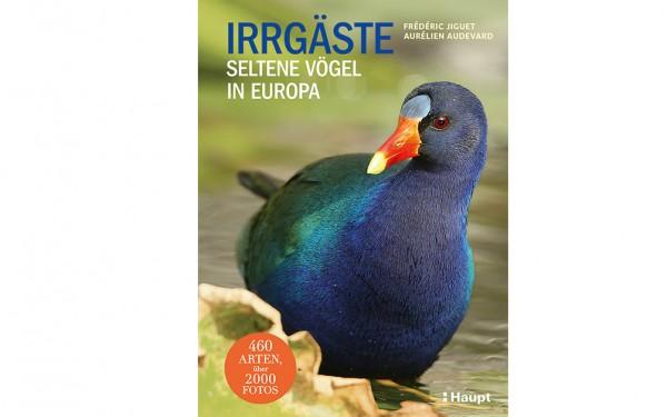 Irrgäste - Seltene Vögel in Europa