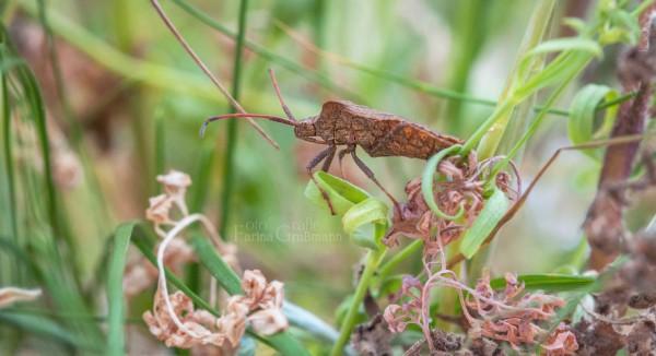unbekanntes-Insekt-7