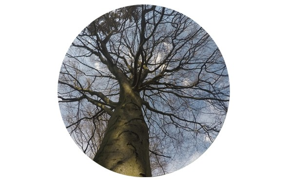 """Magnet """"Baum"""" - 2 Größen zur Auswahl"""