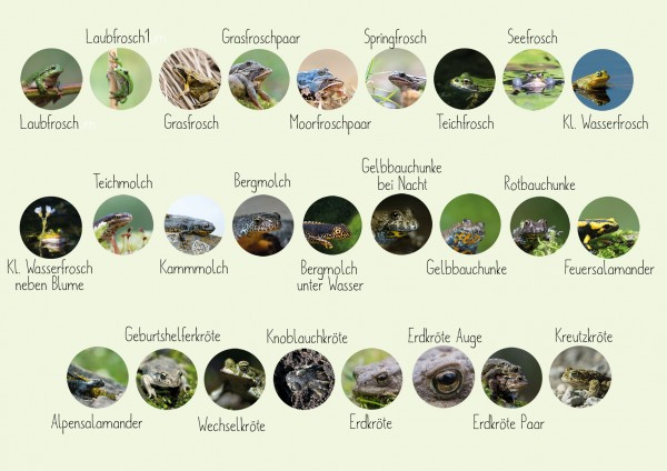 Amphibien Button - 26 Motive in 2 Größen