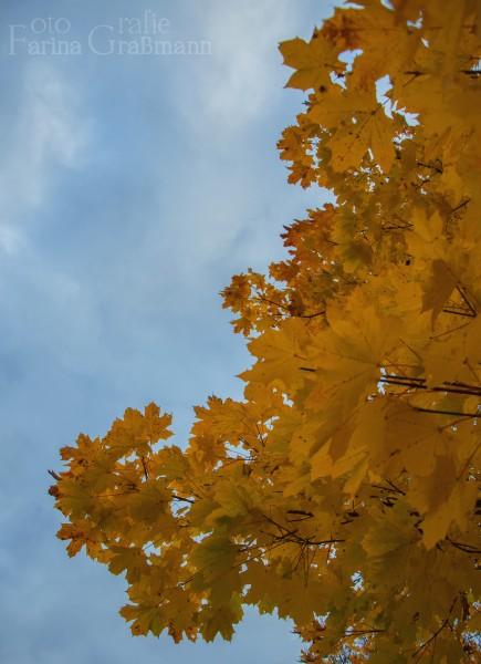 Herbstbaum-2