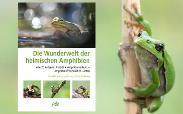Die Wunderwelt der heimischen Amphibien - Farina Graßmann