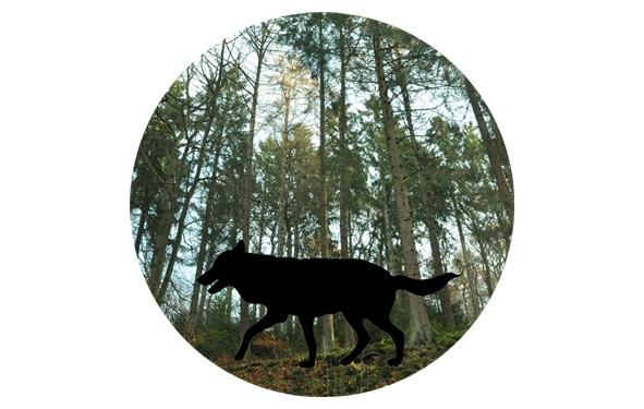"""Button """"Schatten im Wald"""" - 4,30 cm"""