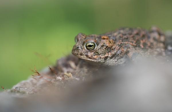 Amphibienleitanlage