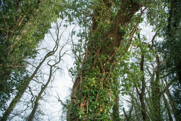 Kletterpflanzenbaum