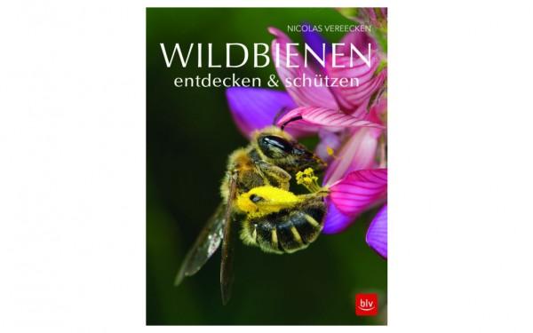 Wildbienen entdecken & schützen