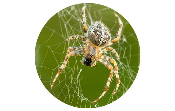 """Button """"Spinne im Netz"""" - 2 Größen zur Auswahl"""